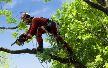 find trusted rated Warwickshire tree surgeons