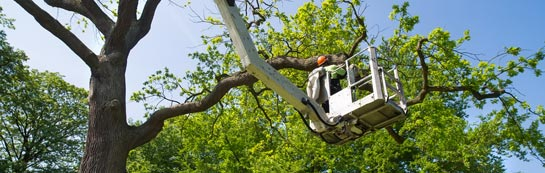 Warwickshire tree surgery services