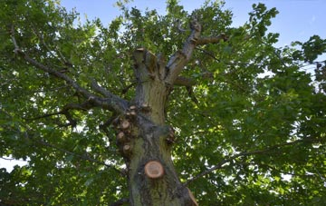 what is Warwickshire tree surgery?